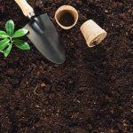 Perhatikan 3 Kesalahan Paling Umum Selama Berkebun